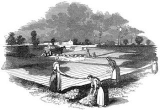 linen left out on bleach fields