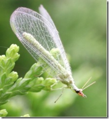 Vacancies at the New Lacewing Biodiversity Hotel