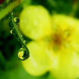 Photographing Refractions in Raindrops