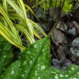 Foliage Texture Garden Plants