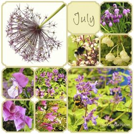 A Scottish Garden Bloggers Bloom Day in July