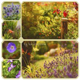 August Summer Flowers