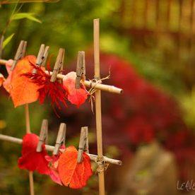 Japanese style garden ideas