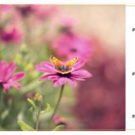 Colour Palette Photographs