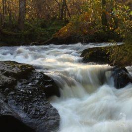 degrees of kelvin white balance - bunchanty spout in autumn