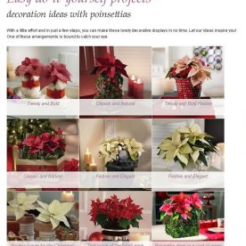 Decoration ideas with Poinsettias