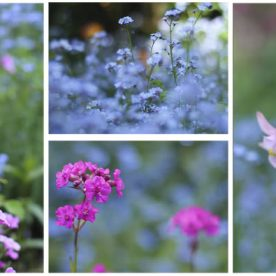 What's in flower in June 2012?