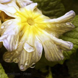 pixel bender with yellow spring primula