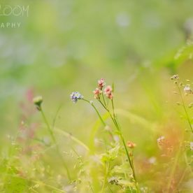 Making Dreamy Bokeh