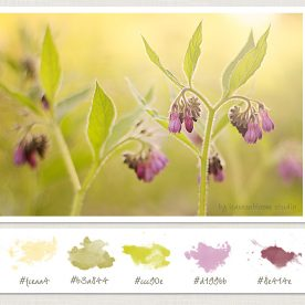 remove colour casts on image of comfrey
