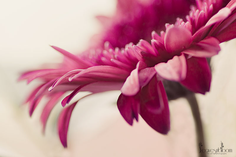 best nature photos 2012 - Gerbera
