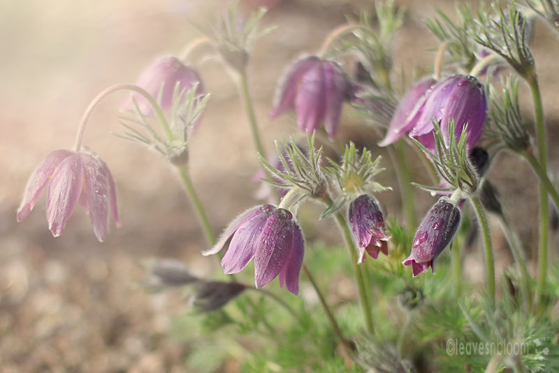 best nature photos 2012 - purple flowers with dew drops