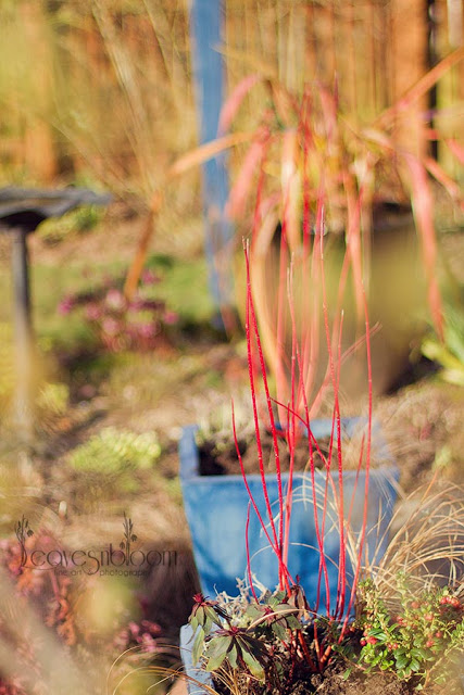 winter interest planted container