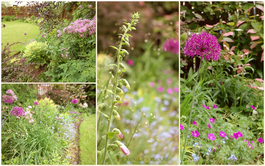 garden flowers - what's in bloom in June