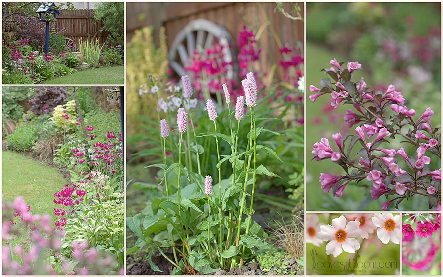 flowering plants in June - what's in bloom in June