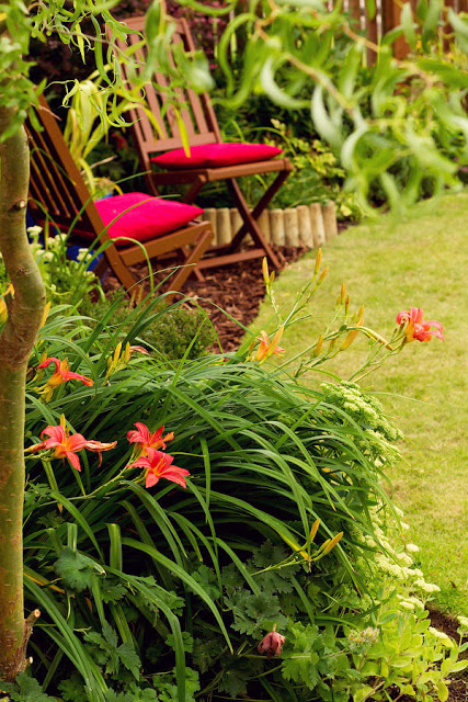 Hemerocallis 'Pink Damask' - August gardening