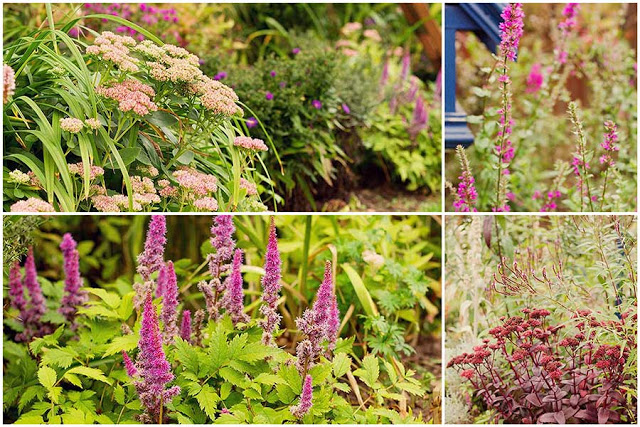 shades of pink, purple in the September garden
