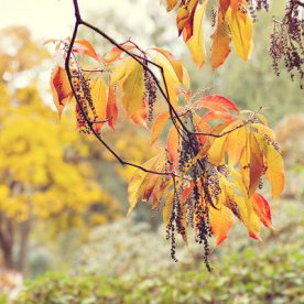 this is an image of foliage from the photograph autumn tutorial