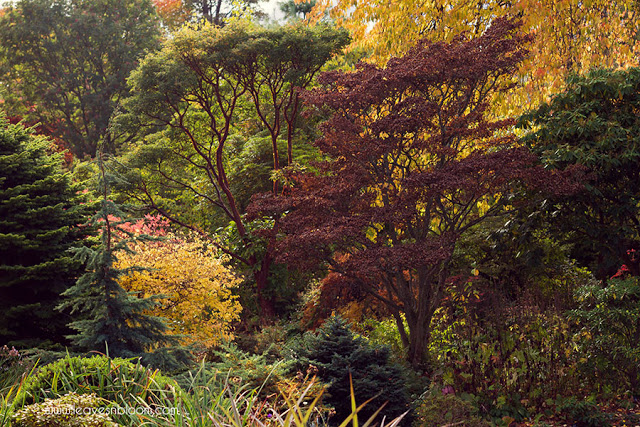 treescape at Autumn at Branklyn