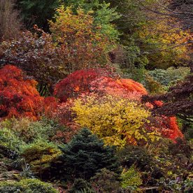 Branklyn Garden autumn foliage, National Trust Scotland