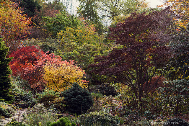 branklyn garden autumn colour