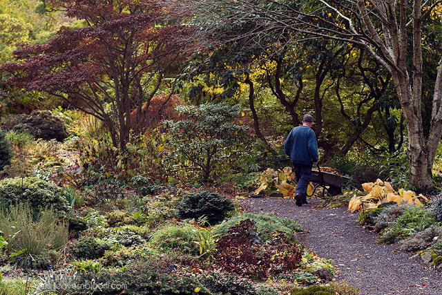 autumn clearing up at Branklyn Garden
