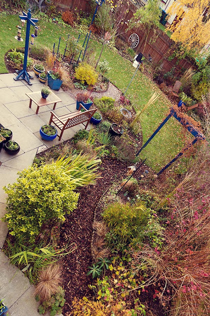 leavesnbloom - November Perthshire garden