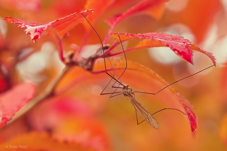 2013 Best Nature Images - daddy long legs in autumn