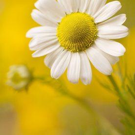 Perthshire Wildflowers