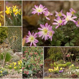 what's in bloom in March