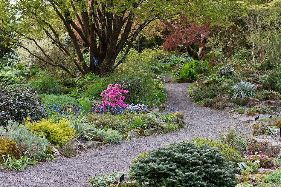 Branklyn Garden in April