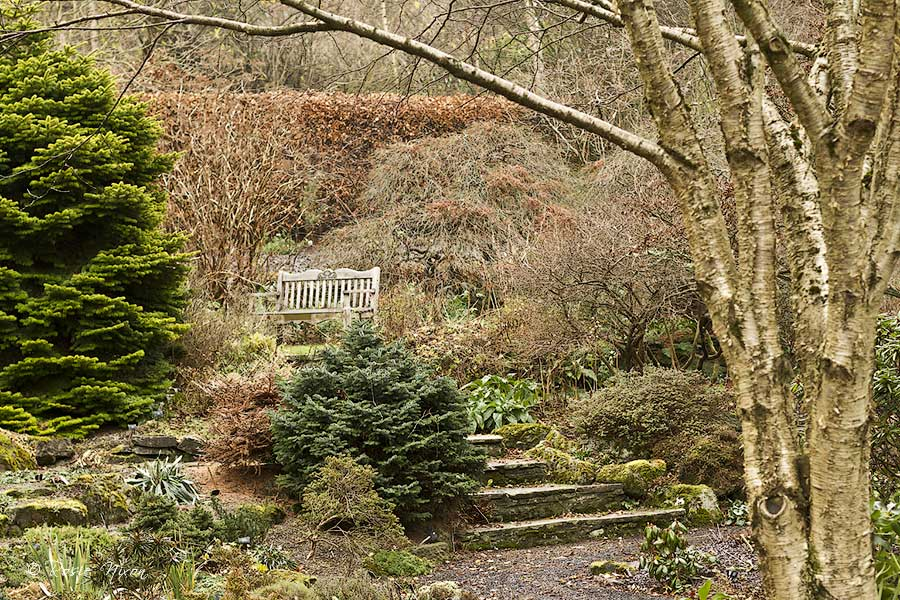 evergreens giving colour and contour in December at Branklyn garden