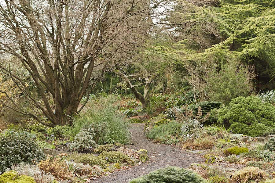 Winter Interest Plants - standing at the base of the rock garden and looking over towards the stream and pond