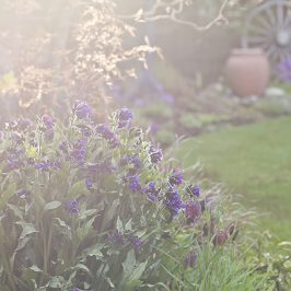 tje april garden