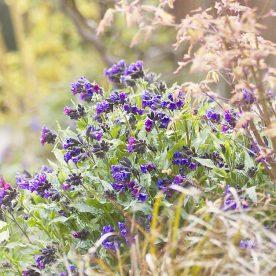 April blooms in my garden