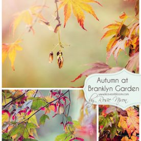 Autumn colour Branklyn Garden 2014