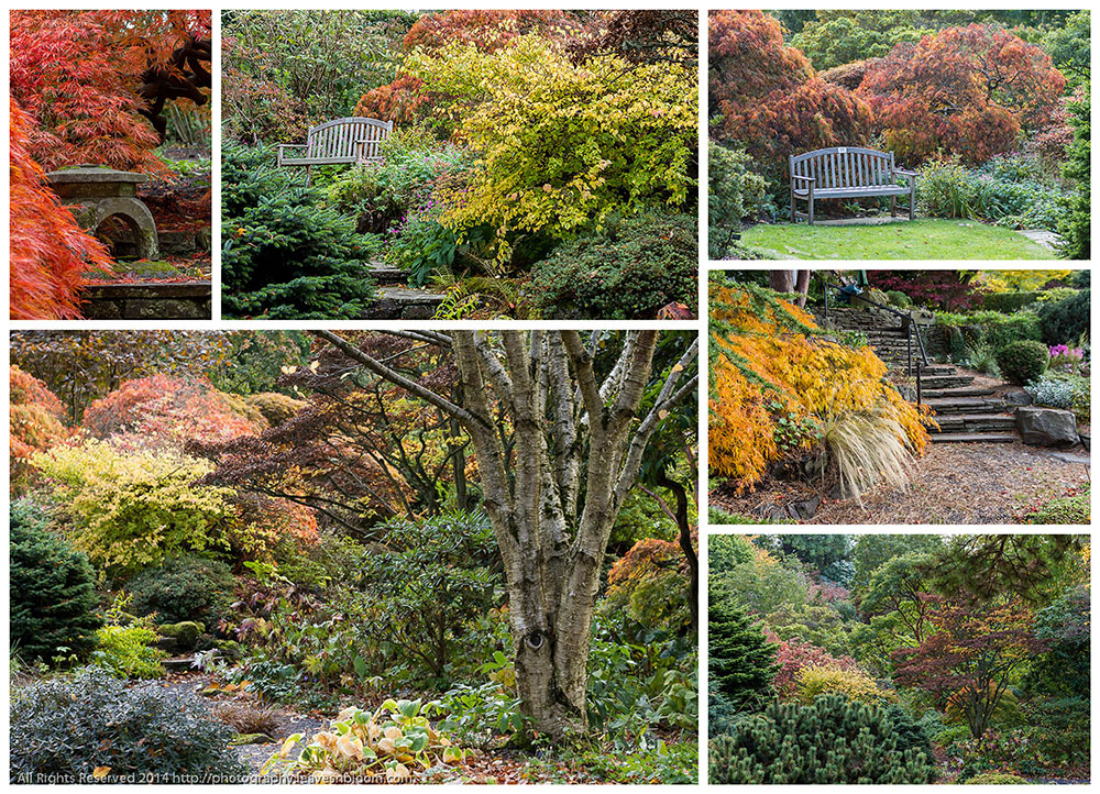 Autumn colour Branklyn Garden - Lots of different textures, shapes and seasonal colours