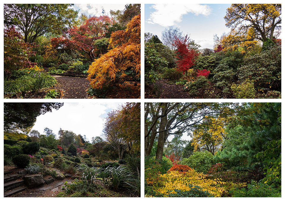 Autumn colour Branklyn Garden - Foliage collage
