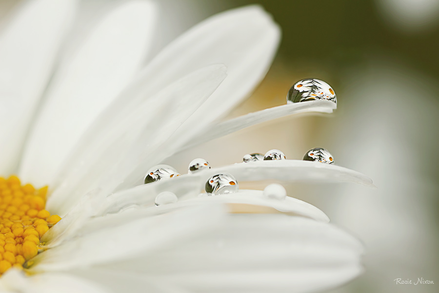 best nature photos 2012 - refractions from a white shasta daisy