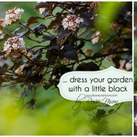this is an image that reads dress your garden in a little black and has a physocarpus in flower in the background