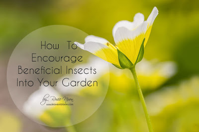 this is an image of a poached egg flower with the text - how to encourage beneficial insects to your garden