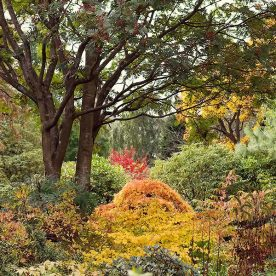 Autumn Branklyn Garden, this is an image of all the different colours of autumn foliage plants in Branklyn Garden in October