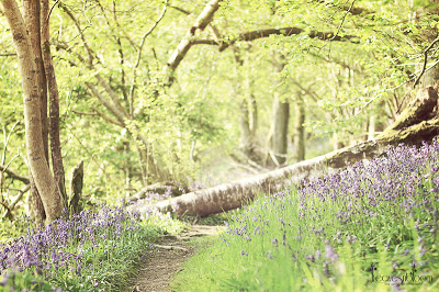 Bluebell Woods Perthshire