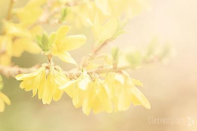 Soft dreamy lensbaby blur