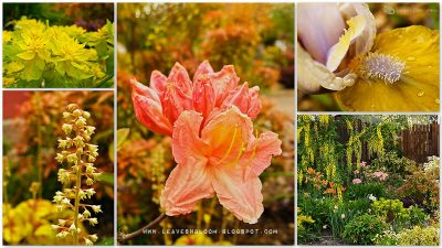 spring flowers in leavesnsbloom front garden