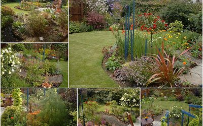 this is an image of the back garden in late summer with phormium and yellow and orange daisies