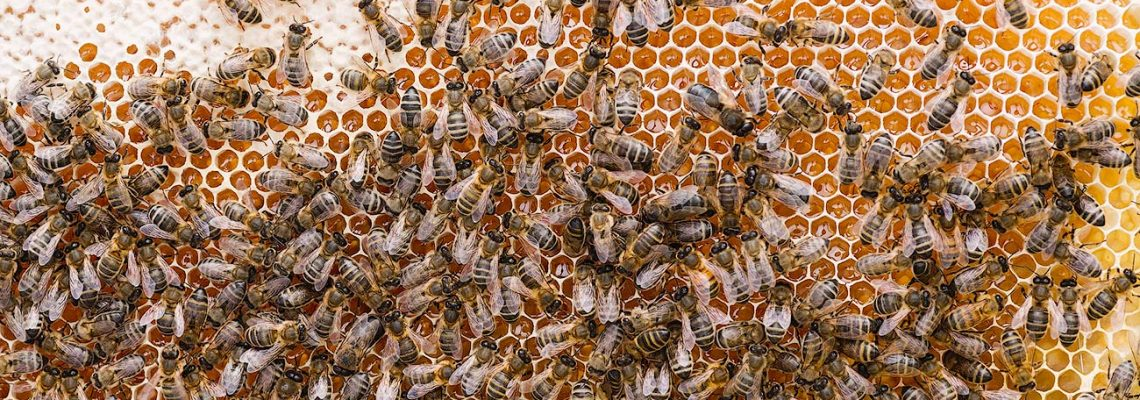 bee happy dark bees ayr beekeepers